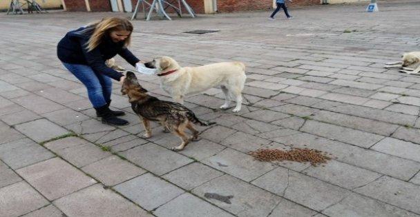 Başkan Büyükakın, sokak hayvanlarını unutmuyor