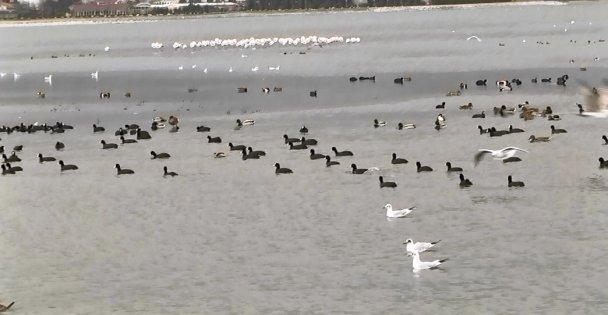 Binlerce su kuşunun...