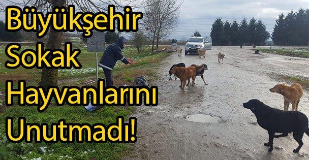 Büyükşehir Sokak Hayvanlarını Unutmadı!