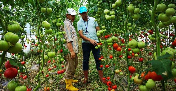 Çiftçilere yüzde 50 hibeli sera desteği
