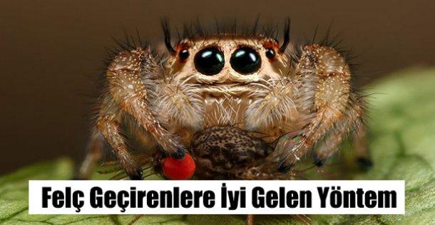 Felç Geçirene Örümcek Tedavisi