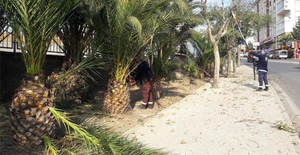 Gebze'de ağaçların bakımları yapıldı