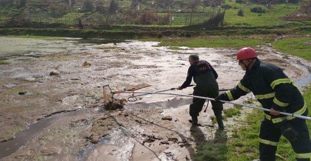 Gebzede bataklıkta mahsur kalan 3 kaz itfaiye ekiplerince kurtarıldı