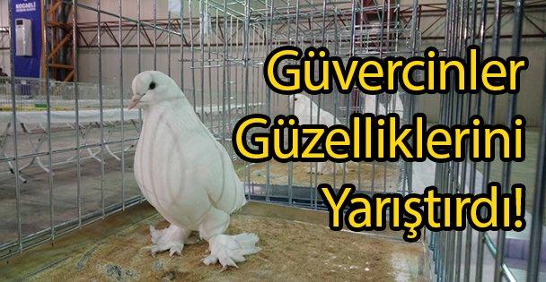 Güvercinler Güzelliklerini Yarıştırdı!