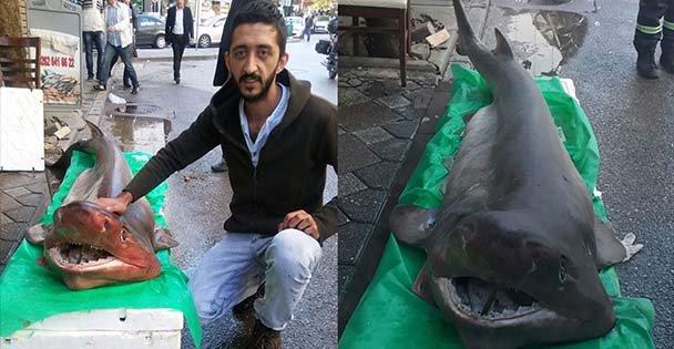Hamsi için attıkları ağa köpek balığı takıldı