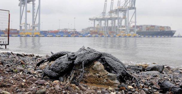 İzmit Körfezi'nde kirliliğin etkileri sürüyor