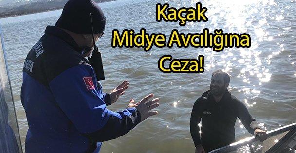 Kaçak Midye Avcılığına Ceza!