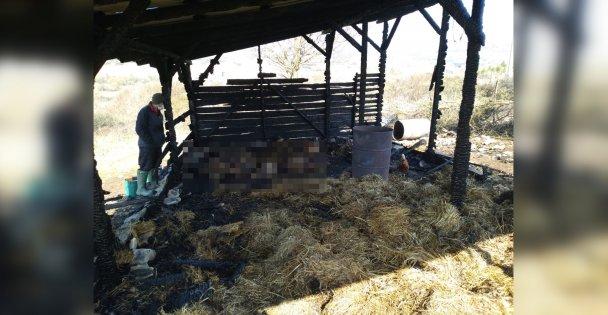 Kandıradaki ağıl yangınında 12 hayvan telef oldu