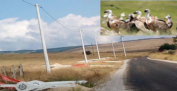 Kuşları Koruyacak Enerji Hattı Yatırımı