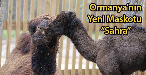 """Ormanya'nın Yeni Maskotu 'Sahra"""""""