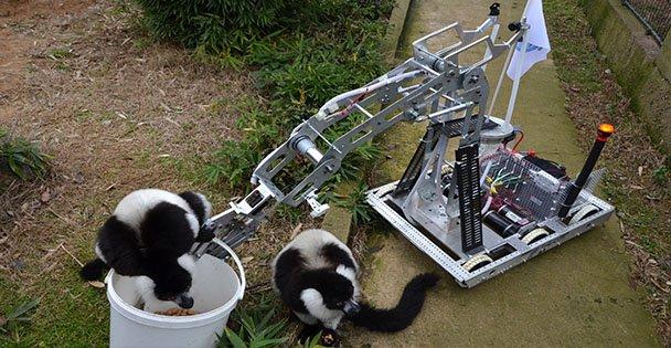 Robot, Lemurları Besledi!