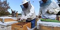 Arıcılar desteklenirse tüm dünyaya yetecek propolis üretilebilir