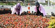 Çayırovada Mevsimlik Çiçek Dikimi ve Yabani Ot Temizliği
