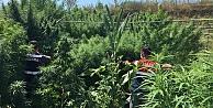 Çiftlikte 44 kilogram esrar ele geçirildi