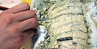 Güney Kutbunda yeni tür bulundu