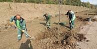Hafriyat alanları 9 bin ağaçla yeşillendi