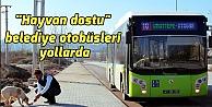 Hayvan dostu belediye otobüsleri yollarda