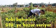 Hobi bahçeleri GTÜ ye huzur veriyor