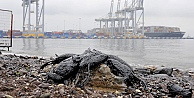 İzmit Körfezinde kirliliğin etkileri sürüyor