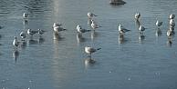 İzmitteki fuar gölü buz tuttu