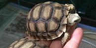 Kaplumbağalar koruma altına alındı