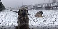 Kocaeline kar geliyor