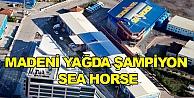 Madeni Yağda şampiyon Sea Horse!