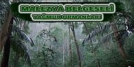 Malezya  Yağmur Ormanları Belgeselimizi İzlediniz mi ?