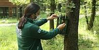 Ormanyanın kuşları doğa gözlemcilerine unutulmaz anlar yaşatıyor