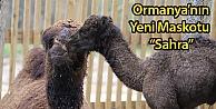 """Ormanya'nın Yeni Maskotu """"Sahra"""""""