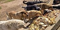 Sokak hayvanlarına gıda ve su takviyesi
