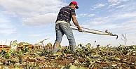 Tarımsal destekleme ödemeleri bugün başlıyor