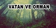 Vatan ve Orman