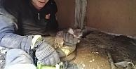 Yağmur Kanalına Sıkışan Kediyi İtfaiye Kurtardı