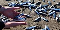 Balıklar Kıyıya Vurdu