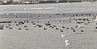 Binlerce  su kuşunun uğrak yeri