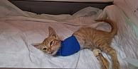Gebze'de yaralı halde bulunan kedi yavrusu cerrahi müdahaleye rağmen 2 bacağını kaybetti