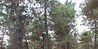 Gebze'deki yeşil alanlara periyodik pakım