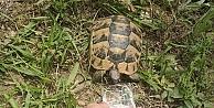 Hayvansever vatandaş bitkin halde bulduğu kaplumbağaya su içirdi