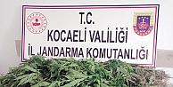 Karamürsel'de drone destekli uyuşturucu operasyonu