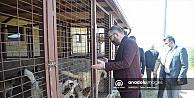 Kocaeli'de koruma altına alınan 97 köpek tedavilerinin ardından sahiplendirilecek