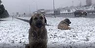 Kocaeli'ne kar geliyor