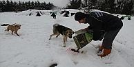Sokak Hayvanlarına Şefkat Eli!