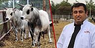 TÜBİTAK boz sığır klonladı