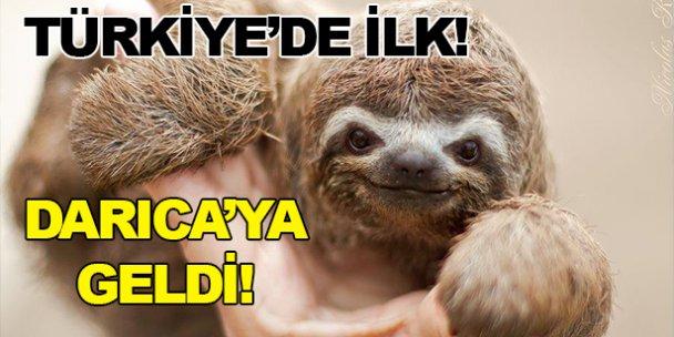 Türkiyede ilk kez Darıcaya geldi!