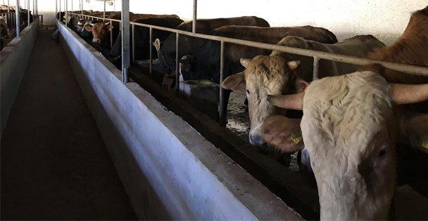 Zeki Kardeşler  Çiftliği Kurban Bayramına Hazır